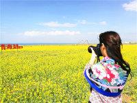 拍摄下青海湖油菜花